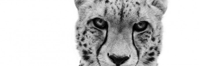 World Wildlife